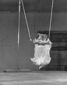 Strange and Funny Vintage Photos of Animals Acting As Intelligent As Humans ~ vintage everyday