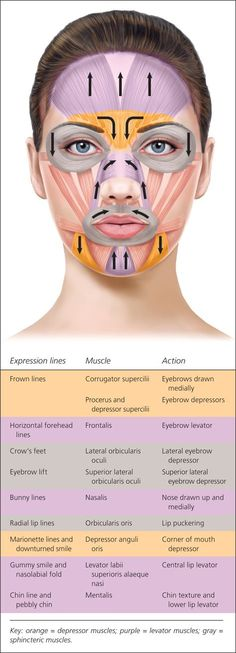 54 Best Facial Anatomy Images