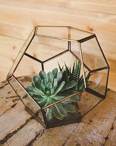 Geometric Terrarium - something like this