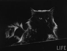 Gjon Mili, an Albanian-American photographer for Life, featured his cat, Blackie, in his photography.