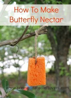 How to Make Butterfly Nectar - Make a quick and simple butterfly nectar recipe to draw butterflies into your garden.