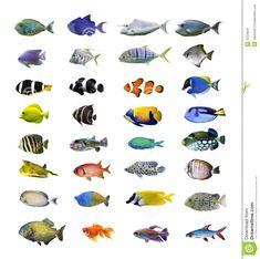 Tropical Fish Stock Image - Image: 12223541