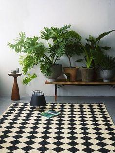 サトイモ科の観葉植物は、葉の形が独特で、スタイリッシュな空間によく合います。  鉢一つでも十分に存在感がありますが、このように並べるのも楽しいものです。