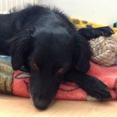 Spitz Cockerspaniel Mischling Timi Wer einen Hund hat, hat immer einen wahren Freund !!! #Hundename: Timi / Rasse: #Spitz Cockerspaniel Mischling      Mehr Fotos: https://magazin.dogs-2-love.com/foto/spitz-cockerspaniel-mischling-timi/ Foto, Hund