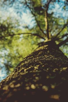 Free download of this photo: https://www.pexels.com/photo/low-angle-photography-of-leaf-tree-24677 #nature #tree #depthOfField