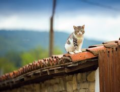 Join YouPic.com - Cat on the roof by Stoyan Katinov