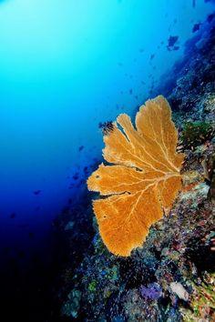 The Arch dive site, salah satu tempat dengan visibilitas terbaik di Alor http://indonesia.travel/id/destination/786/alor #WonderfulIndonesia