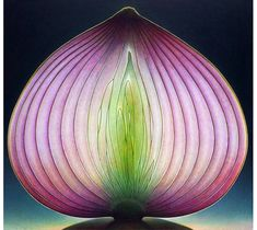 Onion These are not photographs. These are oil paintings by Dennis Wojtkiewicz
