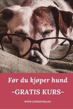 Skal du kjøpe hund? Ta GRATIS kurs som hjelper deg å finne hunderasen for deg og hvilke forberedelser du bør gjøre. Go To Sleep, Sleep Better, Give It To Me, How To Get, Dog Care Tips, Sleeping Dogs, Your Dog, Wellness, Feelings