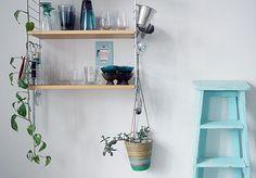 Roikkuvat viherkasvit / Hanging plants