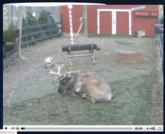 Reindeer Fun: videos, books, crafts & activities for kids!