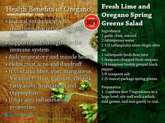 Health Benefits of Oregano  #healthdigezt #health #diet #beauty #nutrition #exercise #food #new #homeremedies #wellness #fitness   Follow us on Pinterest: http://www.pinterest.com/healthdigezt/ Twitter: https://twitter.com/HealthDigezt Instagram: http://instagram.com/healthdigezt Google Plus: google.com/+Healthdigezt Youtube: https://www.youtube.com/user/healthdigeZt Facebook: https://www.facebook.com/healthdigest