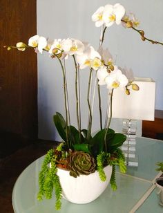 succulents and orchid - Google Search