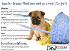Some of our favorite Easter sweets are not so sweet for our pets.