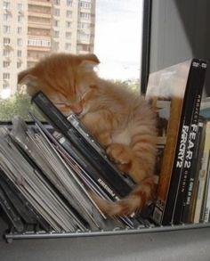 Book storage idea: Store books under a kitten!