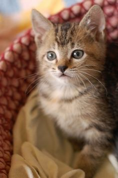 Kitten..love this one!