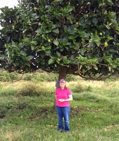 What is Noni fruit? Understanding the major benefits of providing maximum wellness. Fruit Plants, Green Plants, Fruit Trees, Noni Juice, Noni Fruit, Arthritis Symptoms, Polynesian Culture, Alternative Therapies, Body Systems