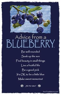 Advice from a Blueberry- Postcard- Your True Nature