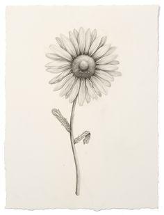 "Aurel Schmidt's ""Fruits"" and Other Drawings: JuxtapozAurelSchmidt023.jpeg"