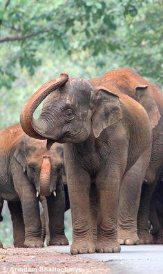 Young Asian elephant. - title Salam Namaste by Arindam Bhattacharya