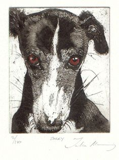 Julia Manning RE artist/printmaker based in Somerset Art And Illustration, Illustrations, Fox Terriers, Greyhound Kunst, Greyhound Breed, Art Graphique, Faber Castell, Dog Portraits, Animal Paintings