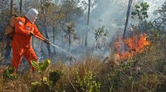 Defesa Civil Municipal combate mais de 300 focos de incêndio na Capital