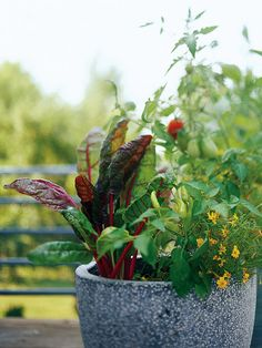 Incorporate Colorful Varieties  Use vegetables with attractive foliage, flowers, or fruits in your favorite planters. Here, red-stemmed Swiss chard, glowing Lemon Gem marigolds, and a hot pepper add great color and texture to a container.