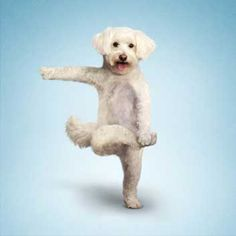 Abby dog in tree pose, well it looks like her!