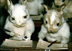 Human Taxidermy Museum | Taxidermy in which the animals are posed doing ... | things that scar ...