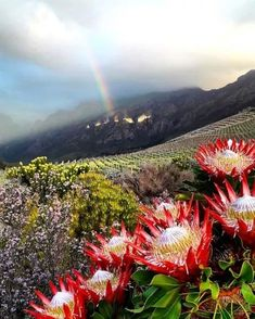 """Have a good Thursday, Cape Town and remember you can't have a rainbow without a little rain."