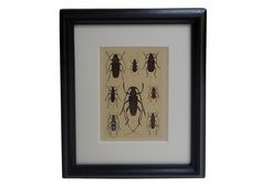 antique plate from 1912 beetle collector's handbook | on sale, 52% off | via rummage home
