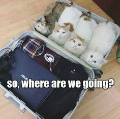 Cats..lol
