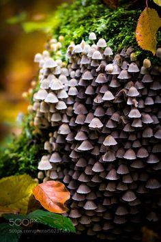 21 Magical Mushroom, Toadstool and Fungi Images Photograph Magic Mushrooms by Dominik Schön on Wild Mushrooms, Stuffed Mushrooms, Tree Mushrooms, Fungi Images, Flora, Theme Nature, Plant Fungus, Mushroom Fungi, Tiny Mushroom