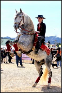 Lusitano. Amazing horses!