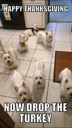 Thanksgiving at my house with my westies and my parents. #lotsoflove #Thanksgiving #Westies