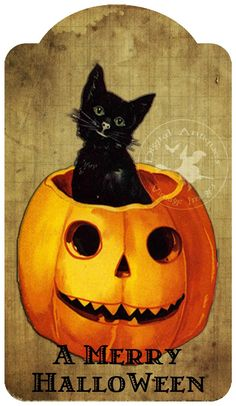 Halloween Vintage Black Cat....looks like my little Arwyn! #BLACKCATLOVE