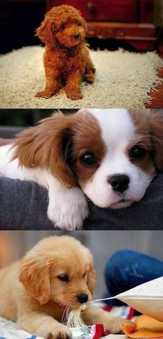 10 most liked and repined puppies on Pinterest, you will love then all:)