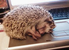 Image result for computer hedgehogs