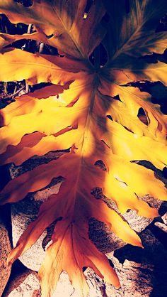 Photos of Fall