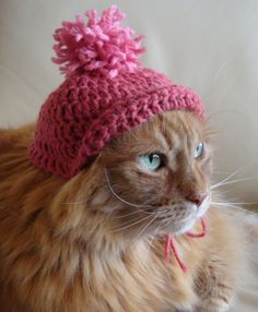Rusty is going to shred your sheets as soon as you go to work, but otherwise he loves his pretty pink crocheted hat.