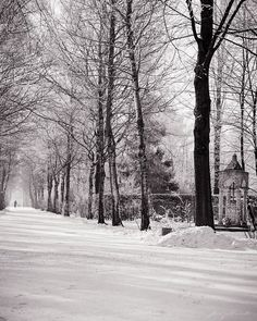 """""""Winter Walk in Perlacher Forst, Munich"""" [OC][800x640] from the Romantic Landscapes collection by J. Riley Stewart (Copyright) 