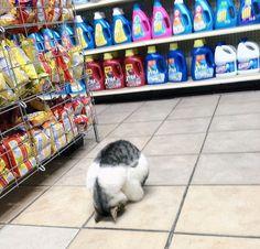 Esse gato que tentou fazer compras numa loja ao invés de online e se arrependeu profundamente. | 41 gatos que tiveram um ano pior do que o seu
