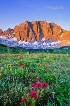 Wildflowers above Floe Lake and the Rockwall, Kootenay National Park, BC, Canada