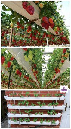 DIY Vertical Pallet Strawberry Planter Tutorials - Video DIY Hydroponic Vertical Pallet Strawberry P Hydroponic Growing, Hydroponic Gardening, Container Gardening, Pallet Gardening, Strawberry Planters Diy, Strawberry Garden, Strawberry Tower, Vertical Vegetable Gardens, Vegetable Garden Design