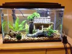 10 Gallon Tank With Male Betta, African Dwarf Frog, Black Mystery Snail And... | My Aquarium Club