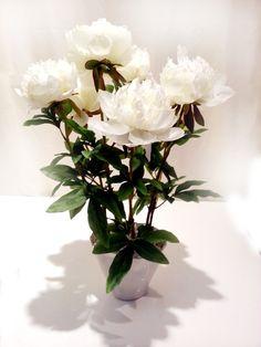 Очень красивые искусственные белые пионы в кашпо. Поставьте их на стол и цветущее настроение вам гарантировано. Ваши гости будут восхищены красотой этих пионов, ведь на первый взгляд и на ощупь их не отличить от настоящих. Конечно, они не имеют аромата, но и не завянут.  http://shishi-shop.ru/products/tsvetochnye-kompozitsii/product-belye-piony-v-keramicheskom-kashpo