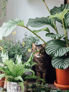 Haustiere und Zimmerpflanzen verstehen sich bei @lobsterandswan - Pflanzenfreude.de