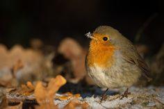Bird by RobertAdamec #animals #animal #pet #pets #animales #animallovers #photooftheday #amazing #picoftheday
