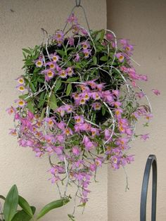 Orchid Mounting Ideas | Mounting on different kinds of medias-den.-loddigessi-5.2010-tree-fern ...