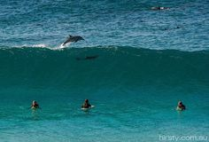 How good is that... Dolphin spotting. Manly Beach, Sydney Australia